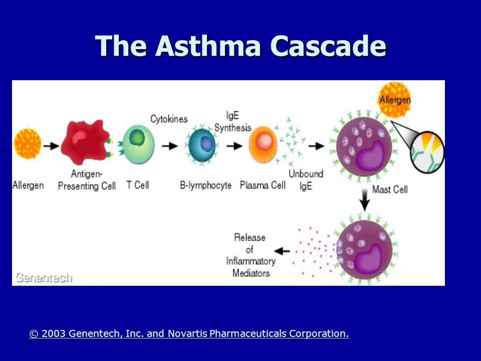 The Asthma Cascade The Immune System Response -The asthma Cascade.