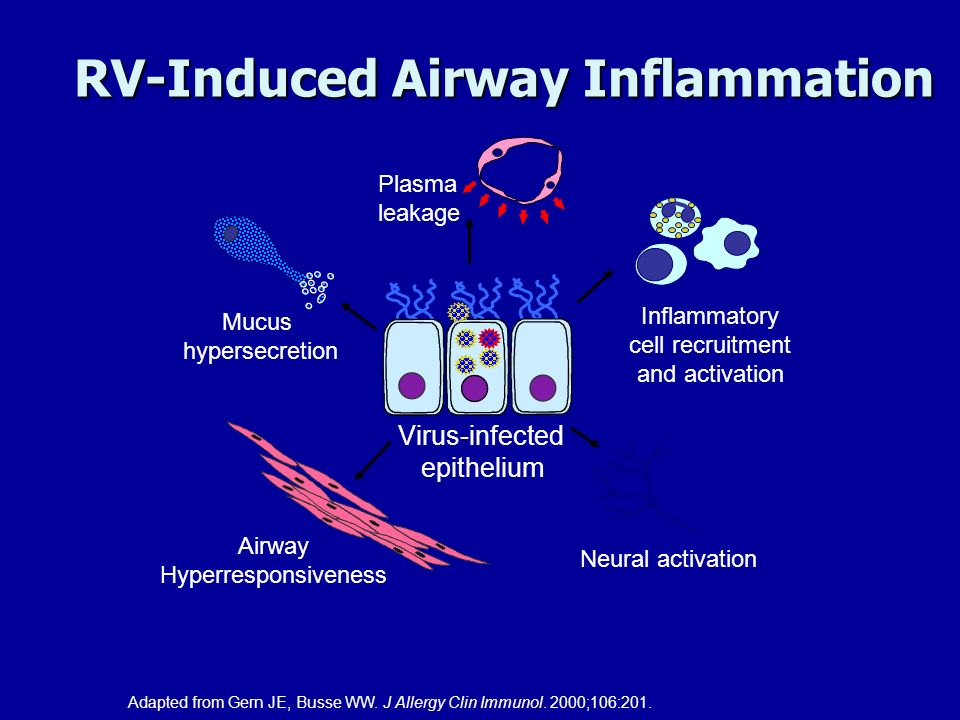 RV-Induced Airway Inflammation