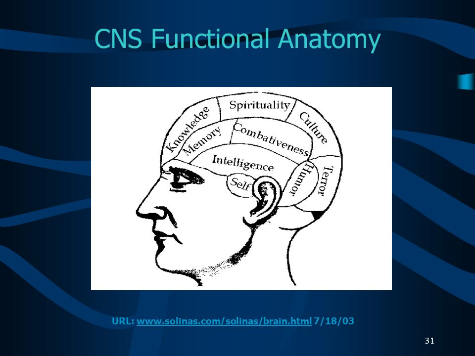 CNS Functional Anatomy