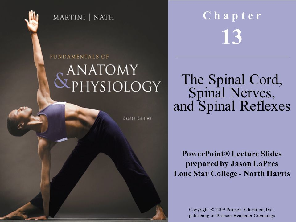 13 The Spinal Cord, Spinal Nerves, and Spinal Reflexes C h a p t e r ...