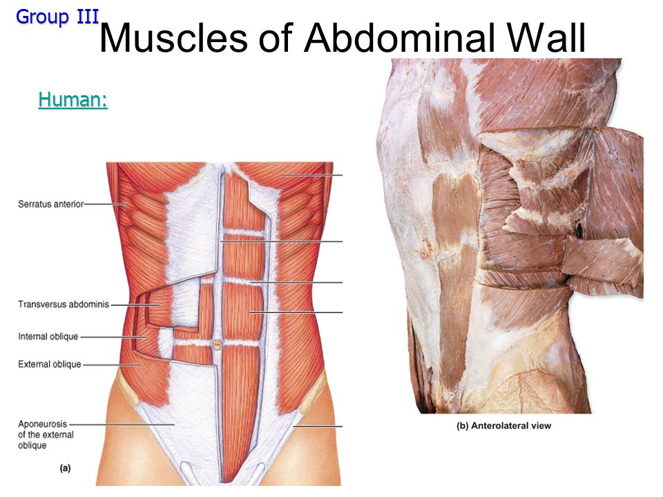 Human Lower Body Muscles Ppt Video Online Download