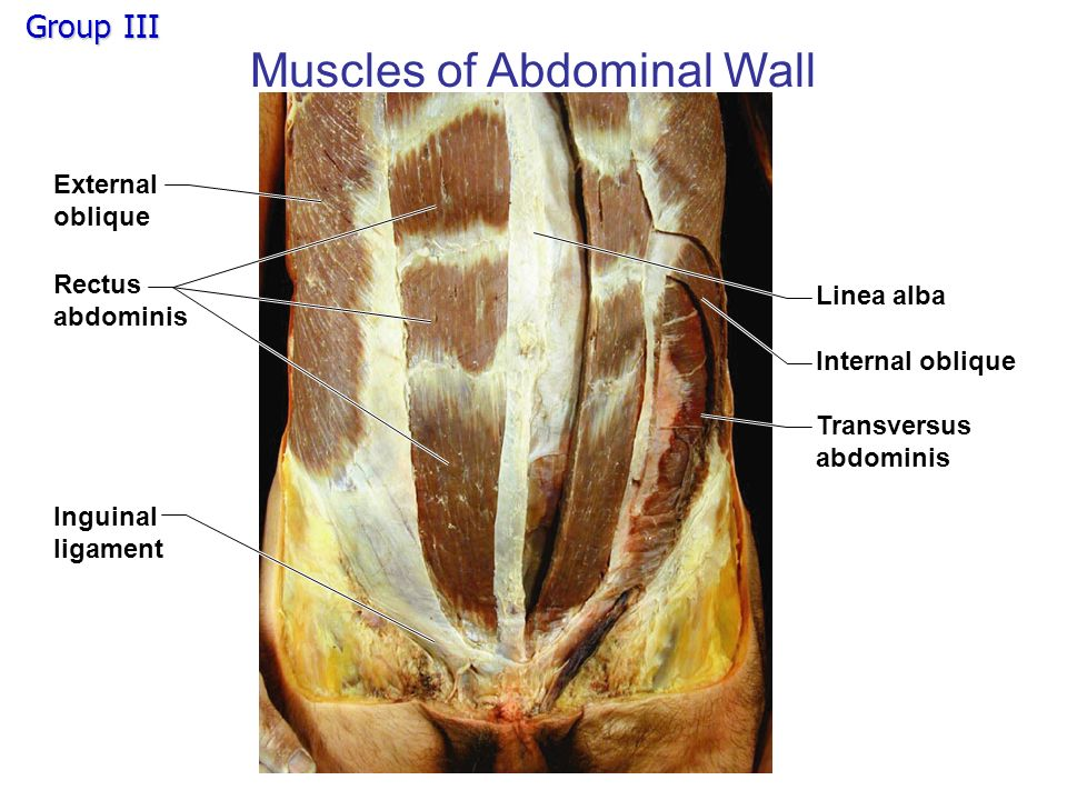Human Lower Body Muscles - ppt video online download