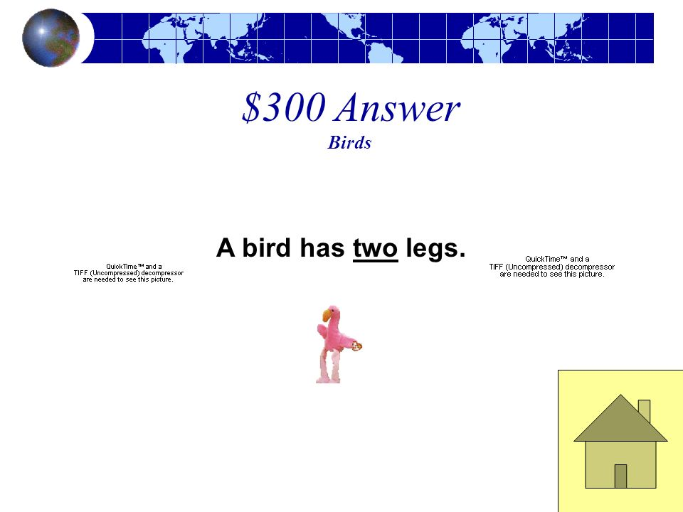 $300 Answer Birds A bird has two legs.