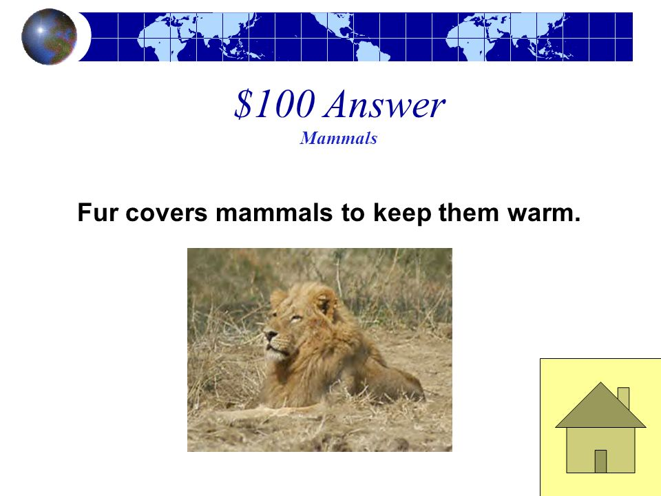 Fur covers mammals to keep them warm.