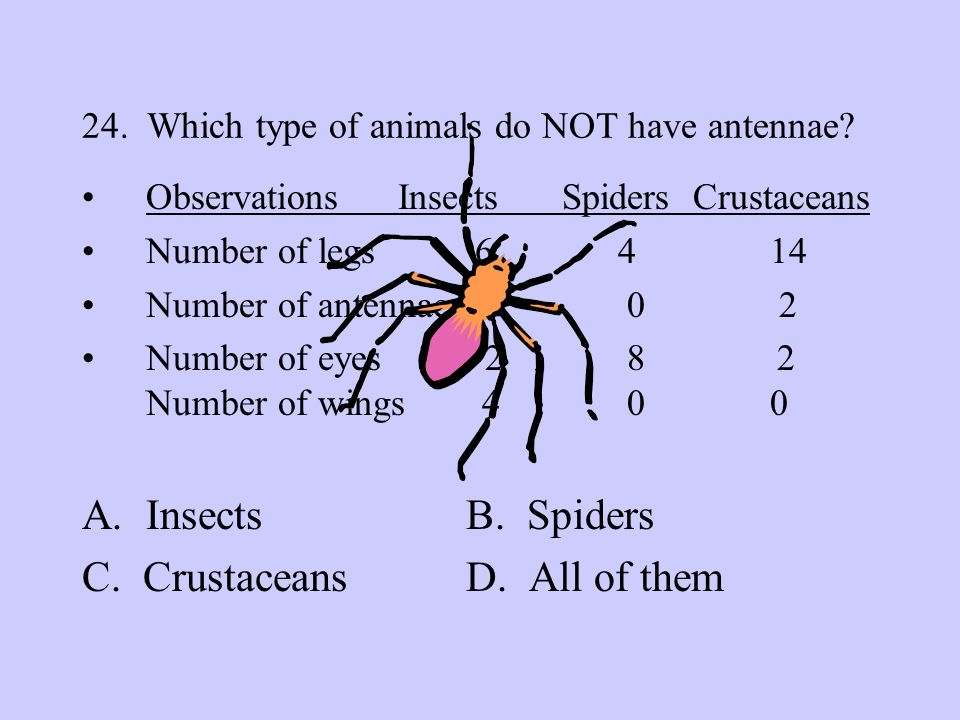 24. Which type of animals do NOT have antennae