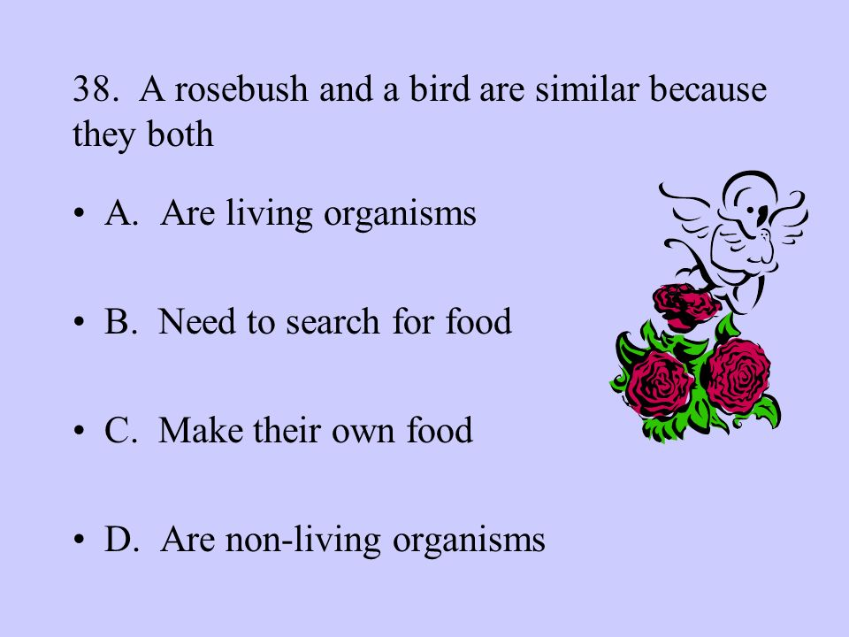 38. A rosebush and a bird are similar because they both