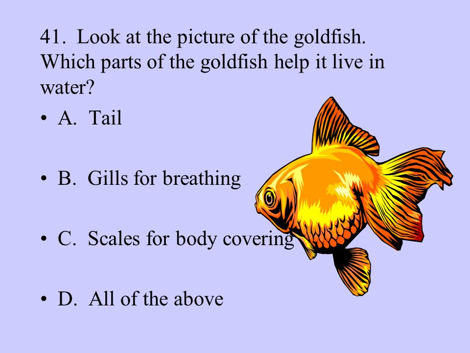 41. Look at the picture of the goldfish