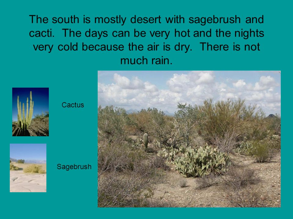 The south is mostly desert with sagebrush and cacti