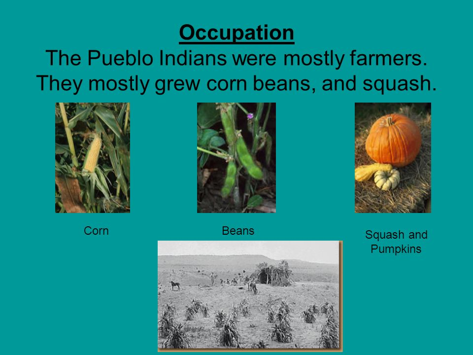 Occupation The Pueblo Indians were mostly farmers