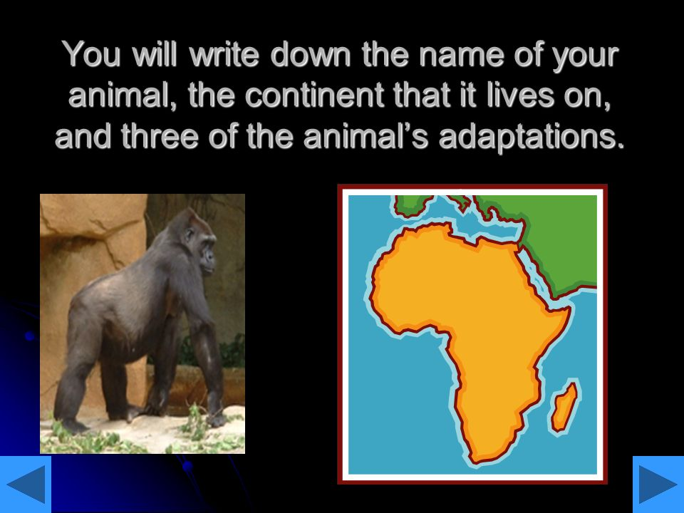 You will write down the name of your animal, the continent that it lives on, and three of the animal's adaptations.