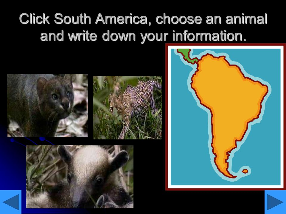 Click South America, choose an animal and write down your information.