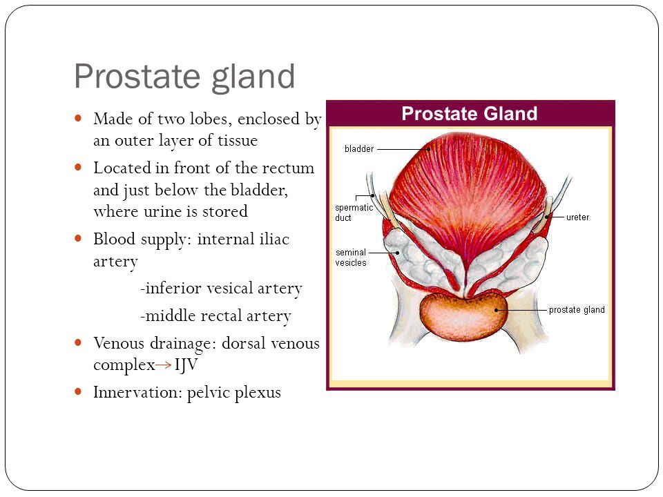 Neoplasms of the Prostate Gland - ppt download