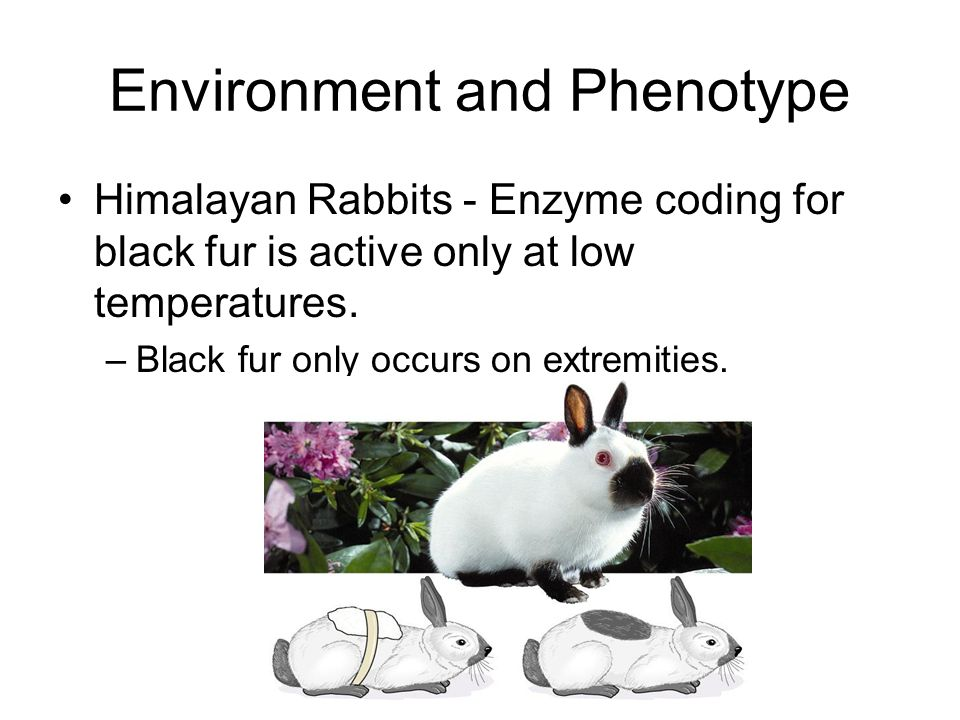 Environment and Phenotype