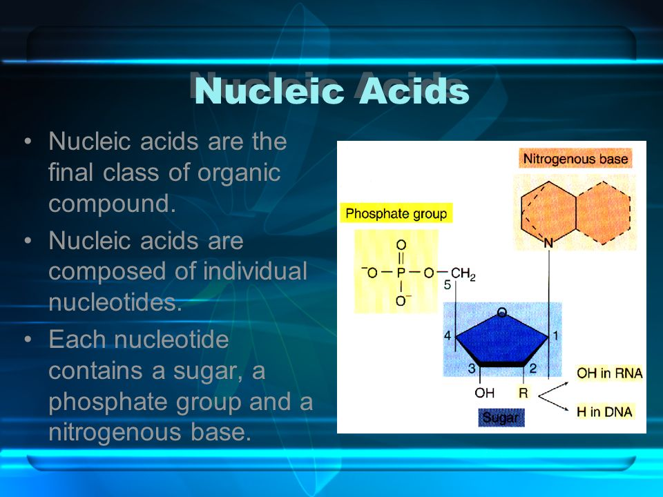 Nucleic Acids Nucleic acids are the final class of organic compound.