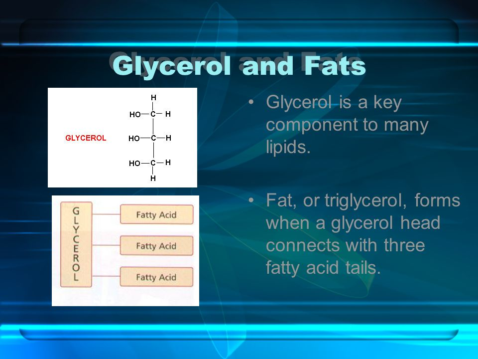 Glycerol and Fats Glycerol is a key component to many lipids.