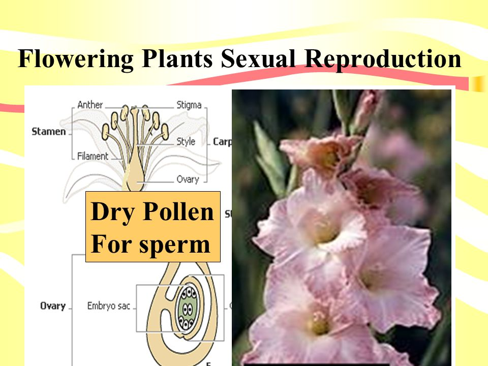 Flowering Plants Sexual Reproduction