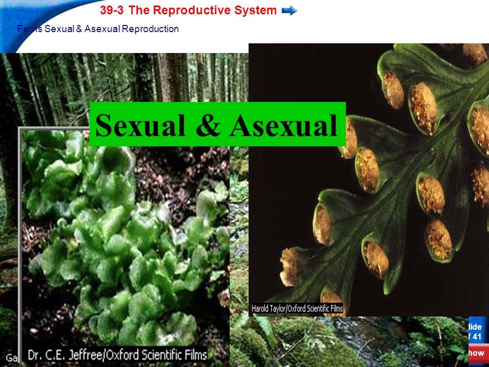 Ferns Sexual & Asexual Reproduction