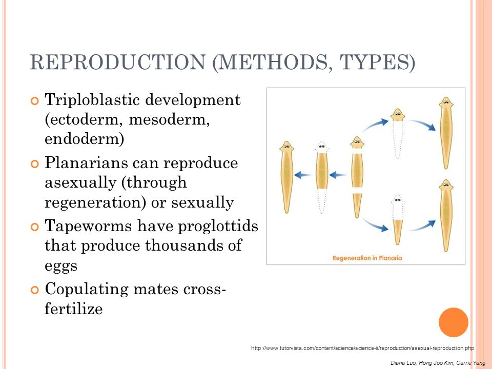 REPRODUCTION (METHODS, TYPES)