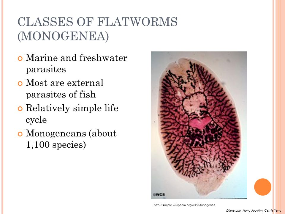 CLASSES OF FLATWORMS (MONOGENEA)