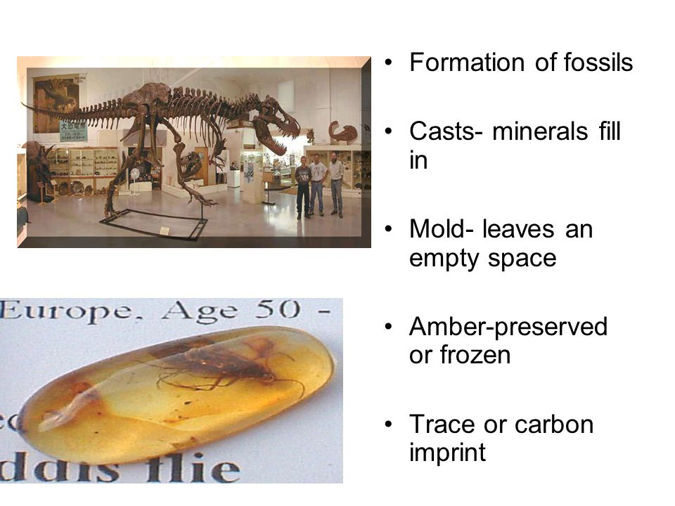 Formation of fossils Casts- minerals fill in. Mold- leaves an empty space. Amber-preserved or frozen.