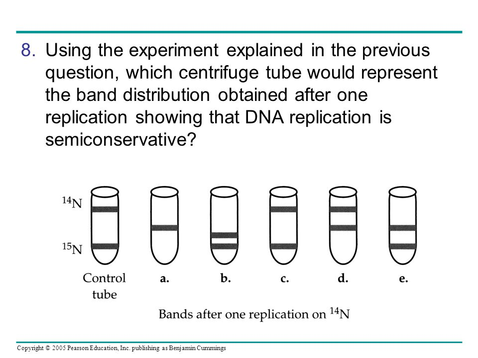 Using the experiment explained in the previous question, which centrifuge tube would represent the band distribution obtained after one replication showing that DNA replication is semiconservative