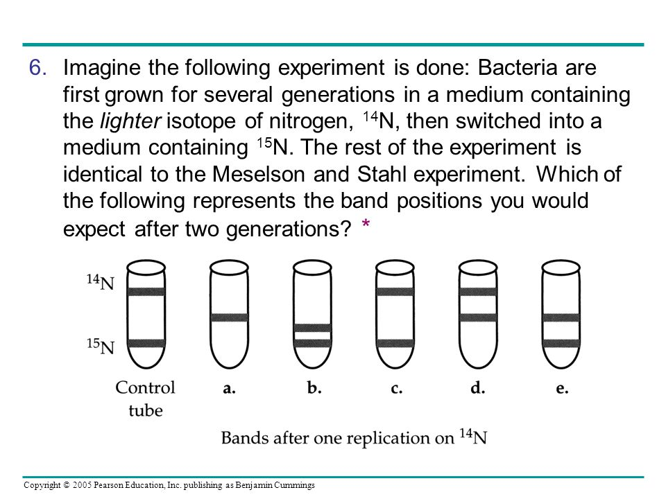 Imagine the following experiment is done: Bacteria are first grown for several generations in a medium containing the lighter isotope of nitrogen, 14N, then switched into a medium containing 15N. The rest of the experiment is identical to the Meselson and Stahl experiment. Which of the following represents the band positions you would expect after two generations *