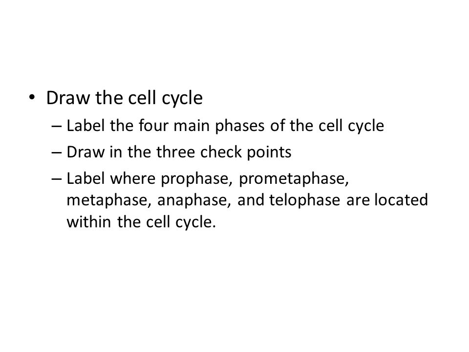 Draw the cell cycle Label the four main phases of the cell cycle