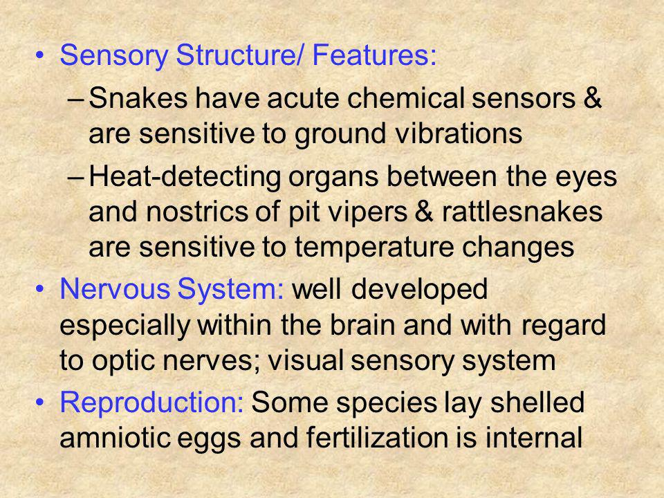 Sensory Structure/ Features:
