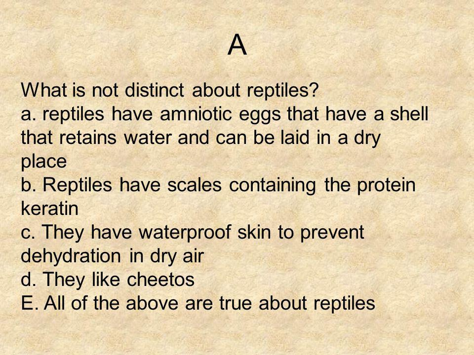 A What is not distinct about reptiles