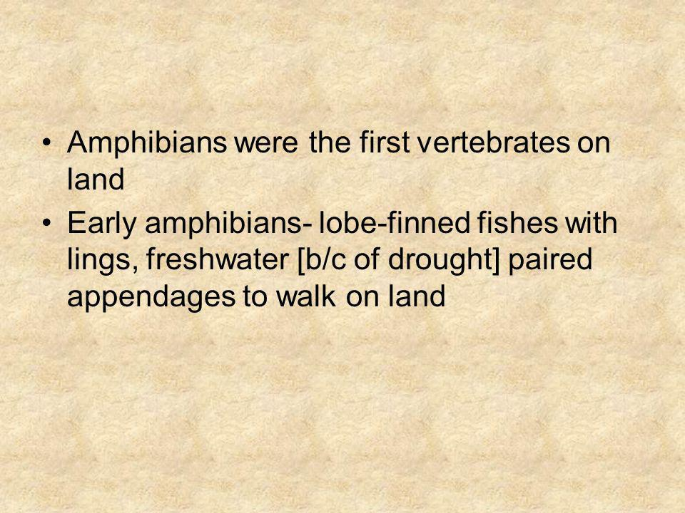Amphibians were the first vertebrates on land