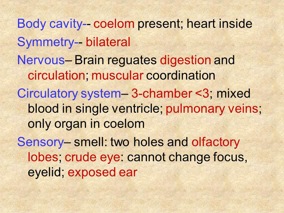 Body cavity-- coelom present; heart inside