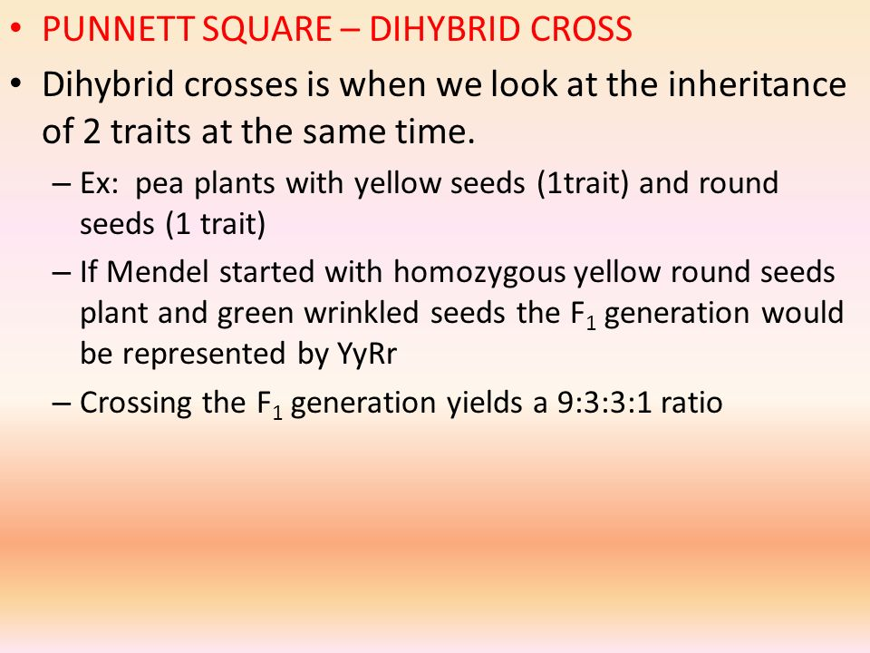 PUNNETT SQUARE – DIHYBRID CROSS