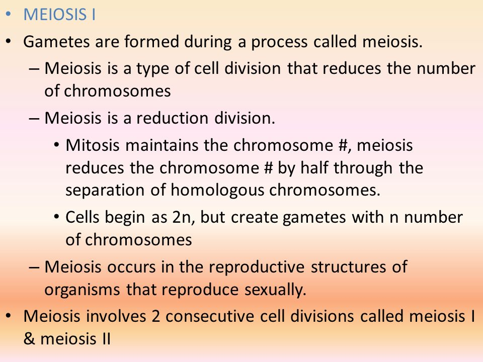 MEIOSIS I Gametes are formed during a process called meiosis. Meiosis is a type of cell division that reduces the number of chromosomes.