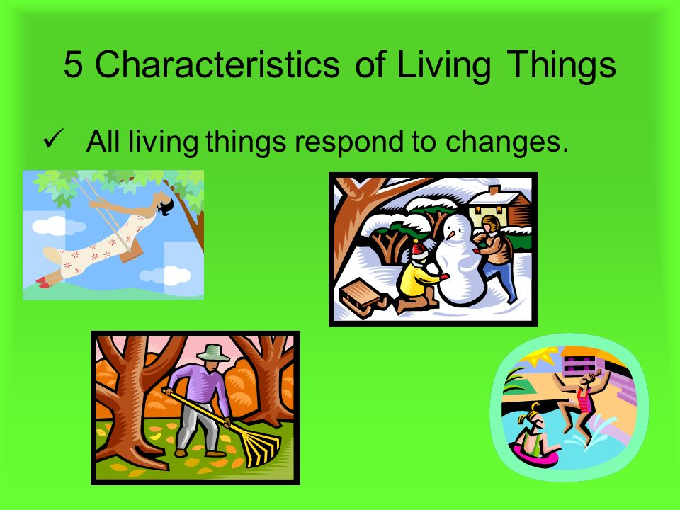 Five Characteristics Of Living Things