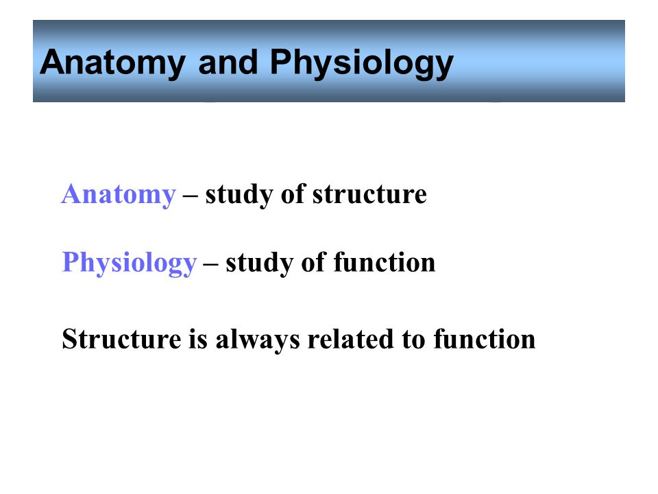 Chapter 1 Introduction to Anatomy and Physiology - ppt video online ...