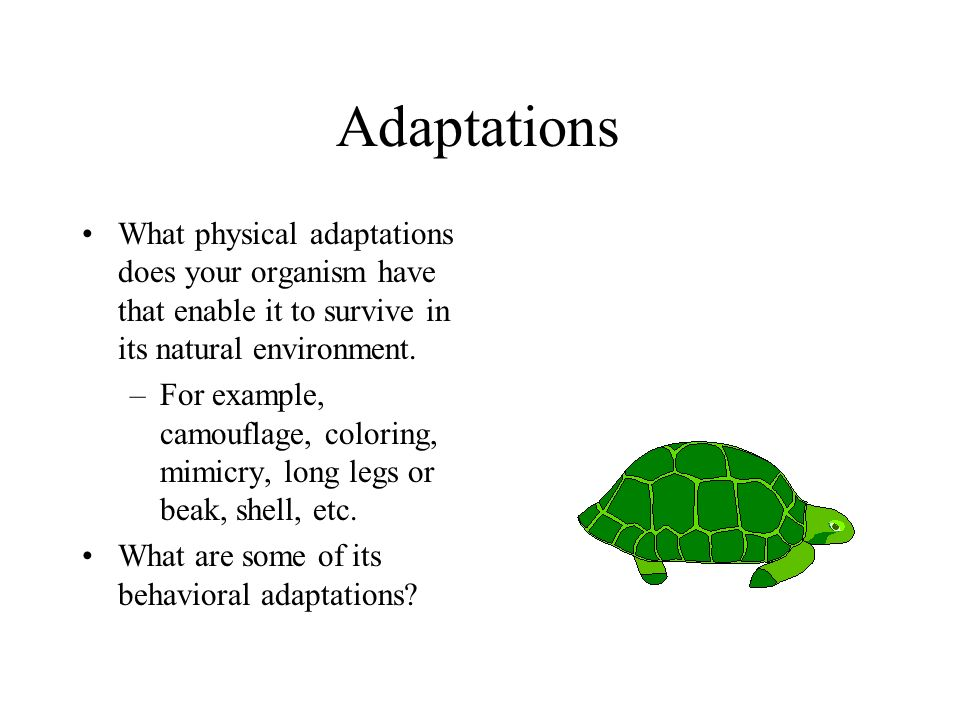Adaptations What physical adaptations does your organism have that enable it to survive in its natural environment.