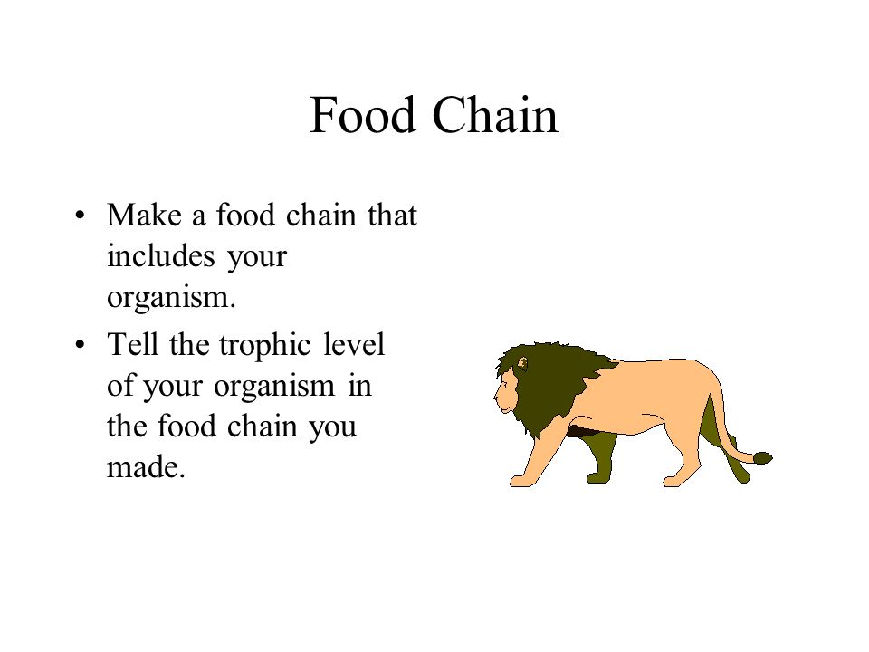 Food Chain Make a food chain that includes your organism.