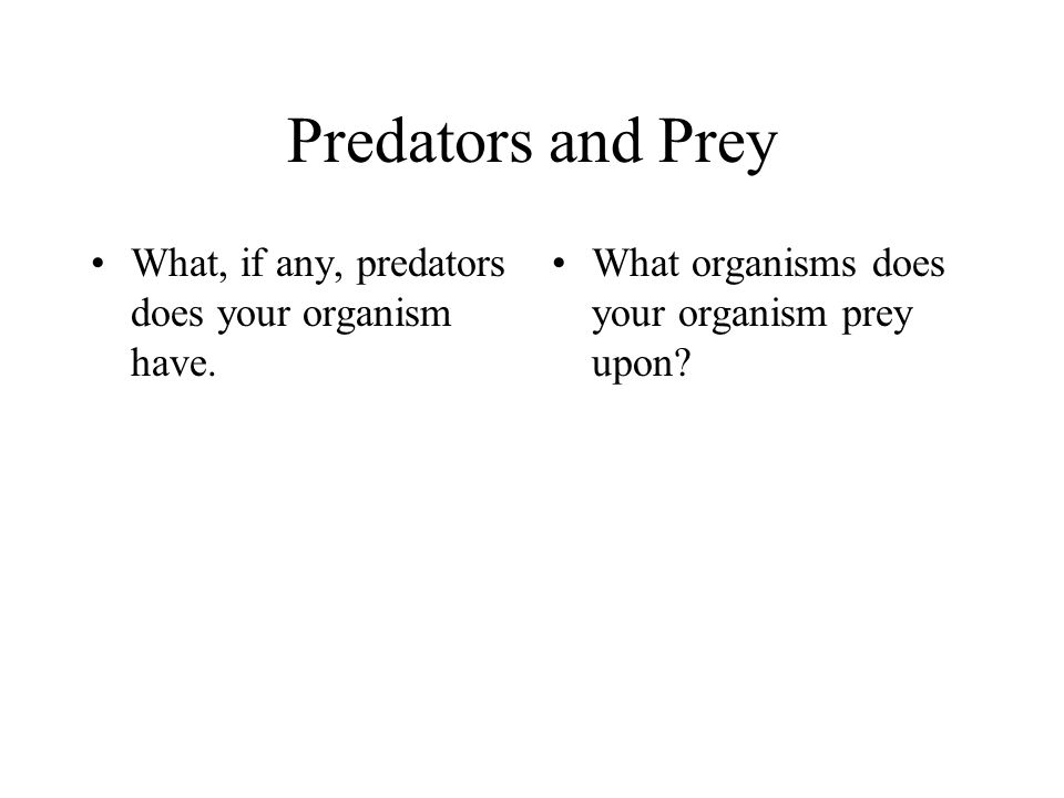Predators and Prey What, if any, predators does your organism have.