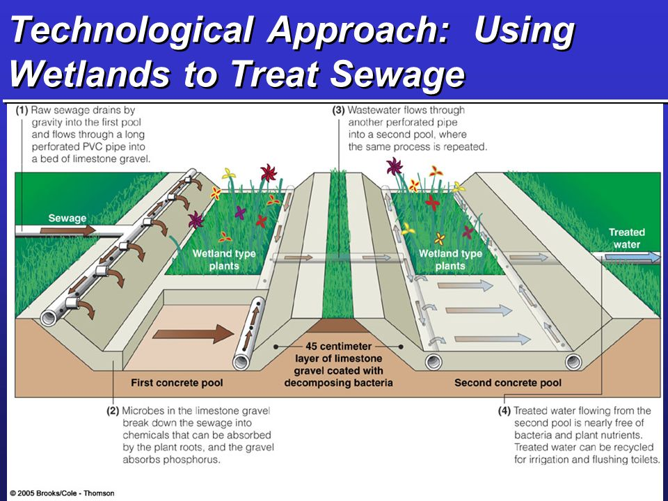 Technological Approach: Using Wetlands to Treat Sewage