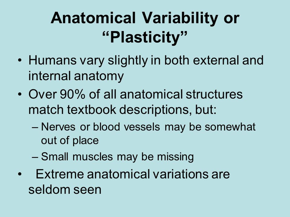 Anatomical Variability or Plasticity