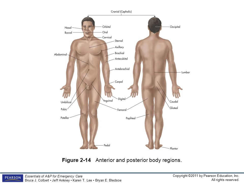 The Human Body Reading The Map Ppt Download