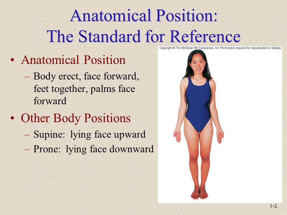 Anatomical Position: The Standard for Reference