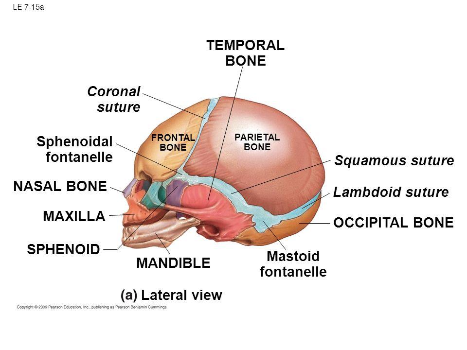 Skull And Skeleton Make Up Quizzam Ppt Video Online Download
