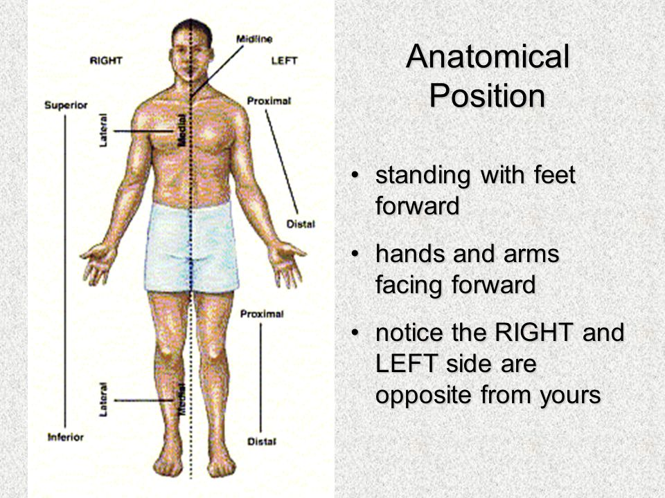 Organization Of The Human Body Ppt Video Online Download