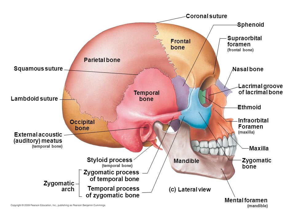 Zygomatic Process Of Frontal Bone