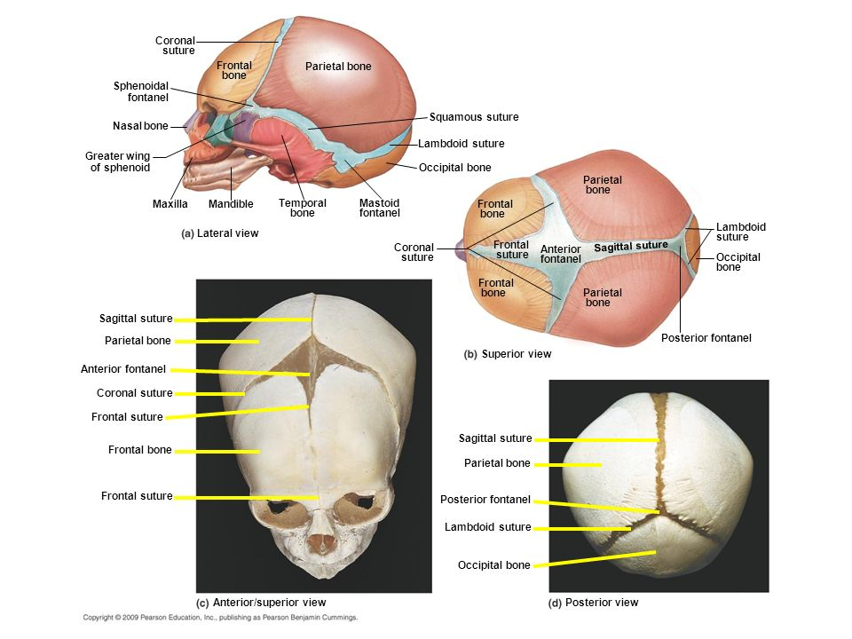 The nasal bone is one of two small oblong bones that vary in size and form in different individuals They lie side by side between the frontal processes