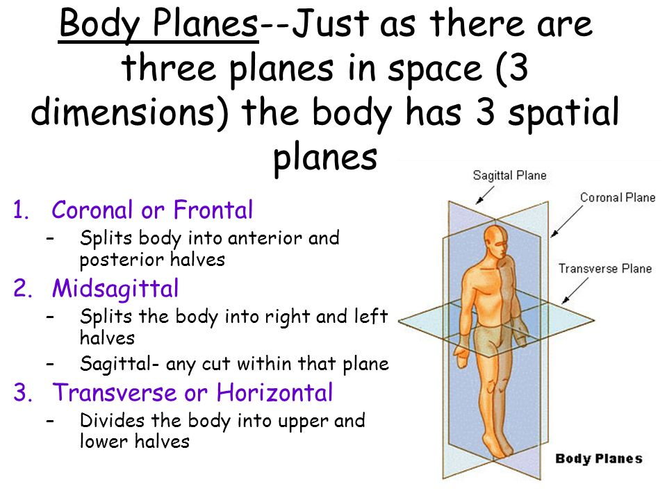 Body Planes--Just as there are three planes in space (3 dimensions) the body has 3 spatial planes