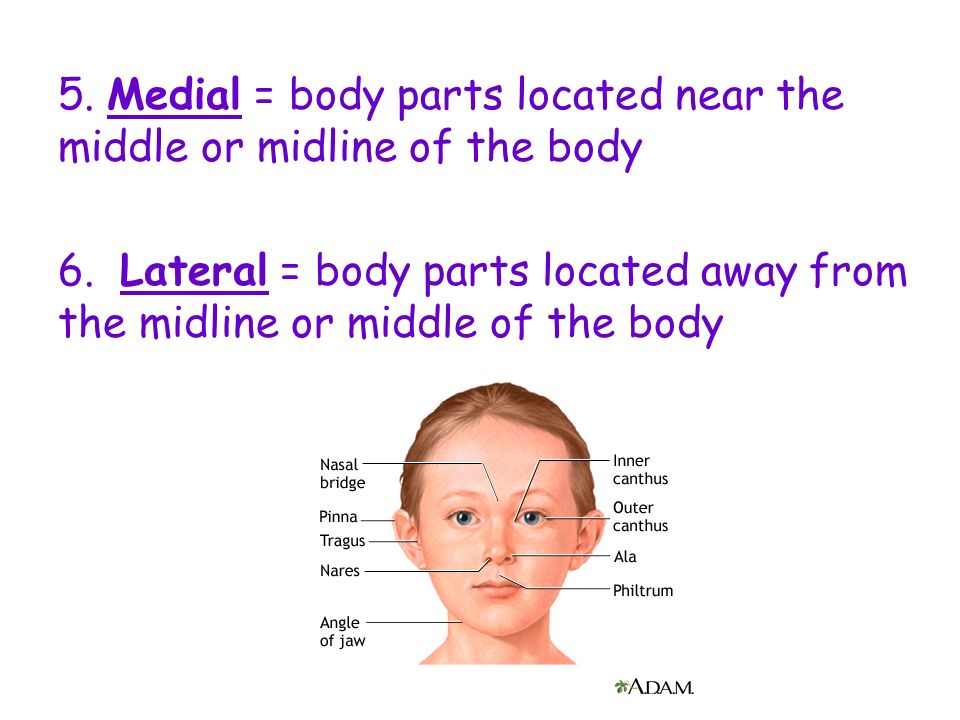 5. Medial = body parts located near the middle or midline of the body