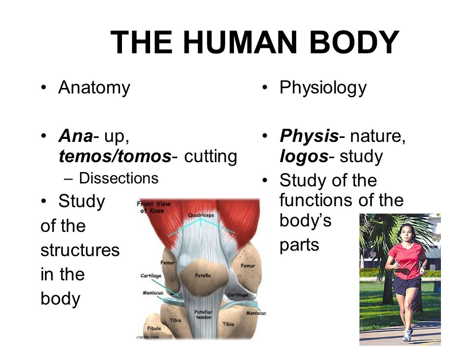 THE HUMAN BODY Anatomy Ana- up, temos/tomos- cutting Study of the