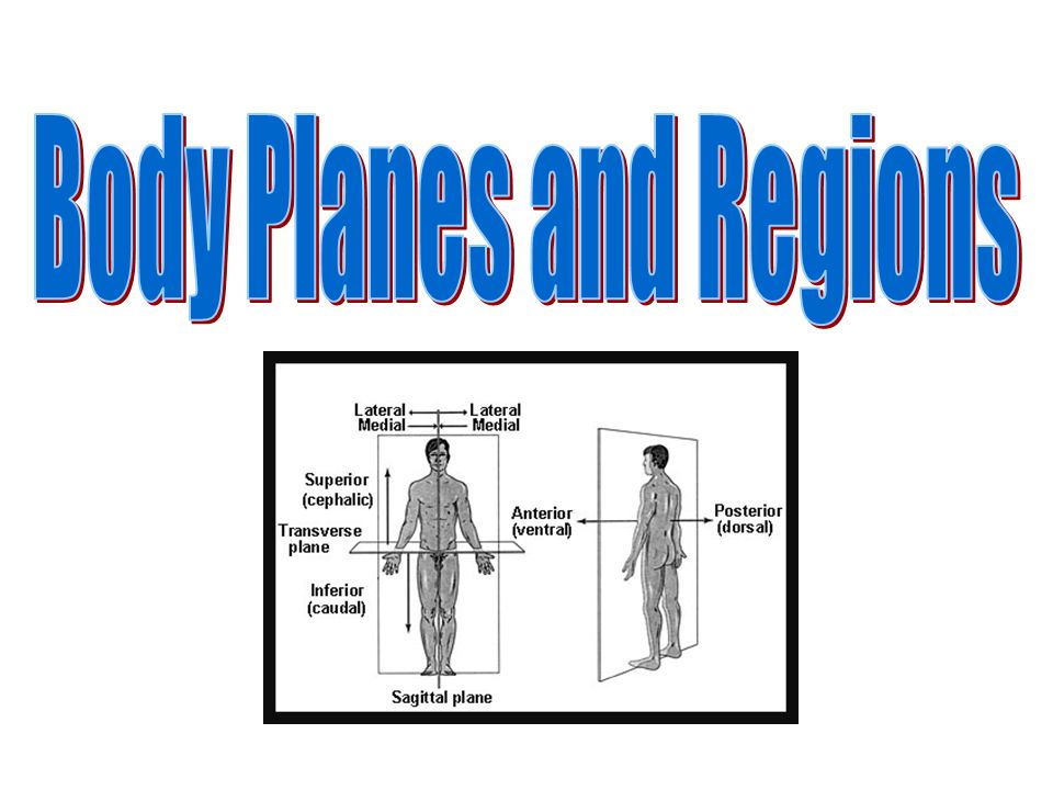 Body Planes and Regions
